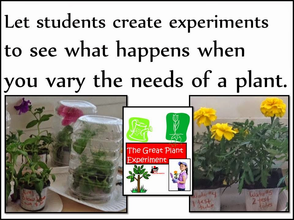 Let students experiment with a plant to see what happens when you vary the needs of a plant.  Ideas and resources from Raki's Rad Resources.
