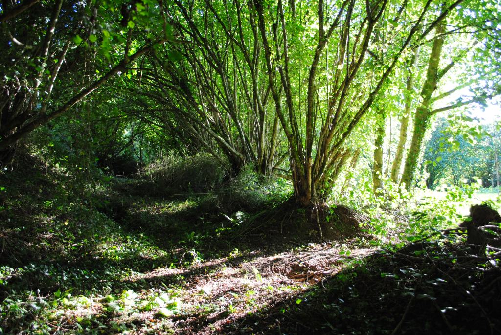 Kruidwis hazelaars en de tuin for Tuin snoeien