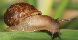 Pi‧Haru - 蝸牛保養品