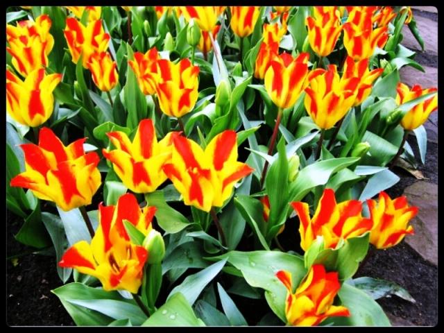 moda estilo costura tulipas sunday morning letra maroon 5 música