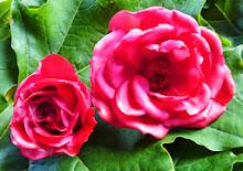 bewaar je rozen!