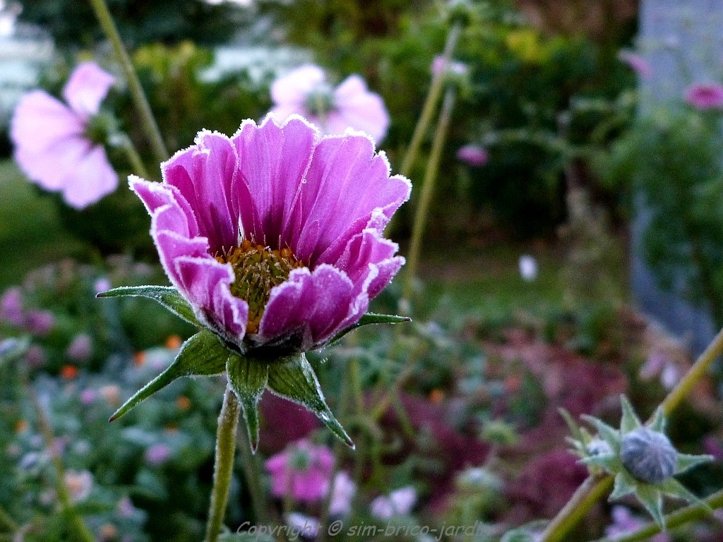 Sim brico jardin givre for Brico jardin challans