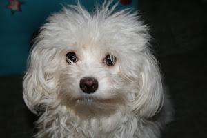 Hundefräulein Lilli