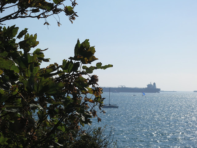 Sycamore tree in morning beside sea with ship in background.