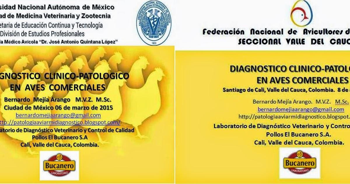 Patología Aviar. Mi diagnóstico, su concepto.: DIAGNOSTICO