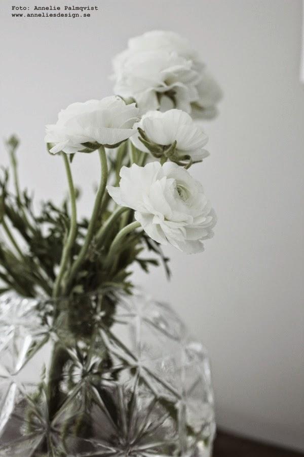 vas från hemtex, vaser, rund vas, ranunkel, ranunkler, blomma, snittblomma, snittblommor, blommorna, vitt, vit, vita, inredningsblogg, blogg, bloggen,