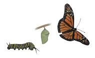 Fichas de lepidópteros