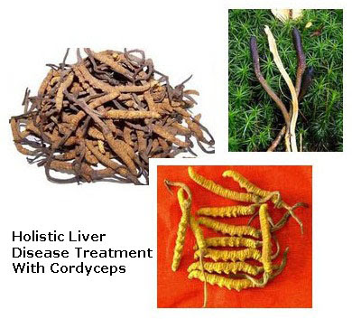 cordyceps sinensis is a highly medicinal fungus