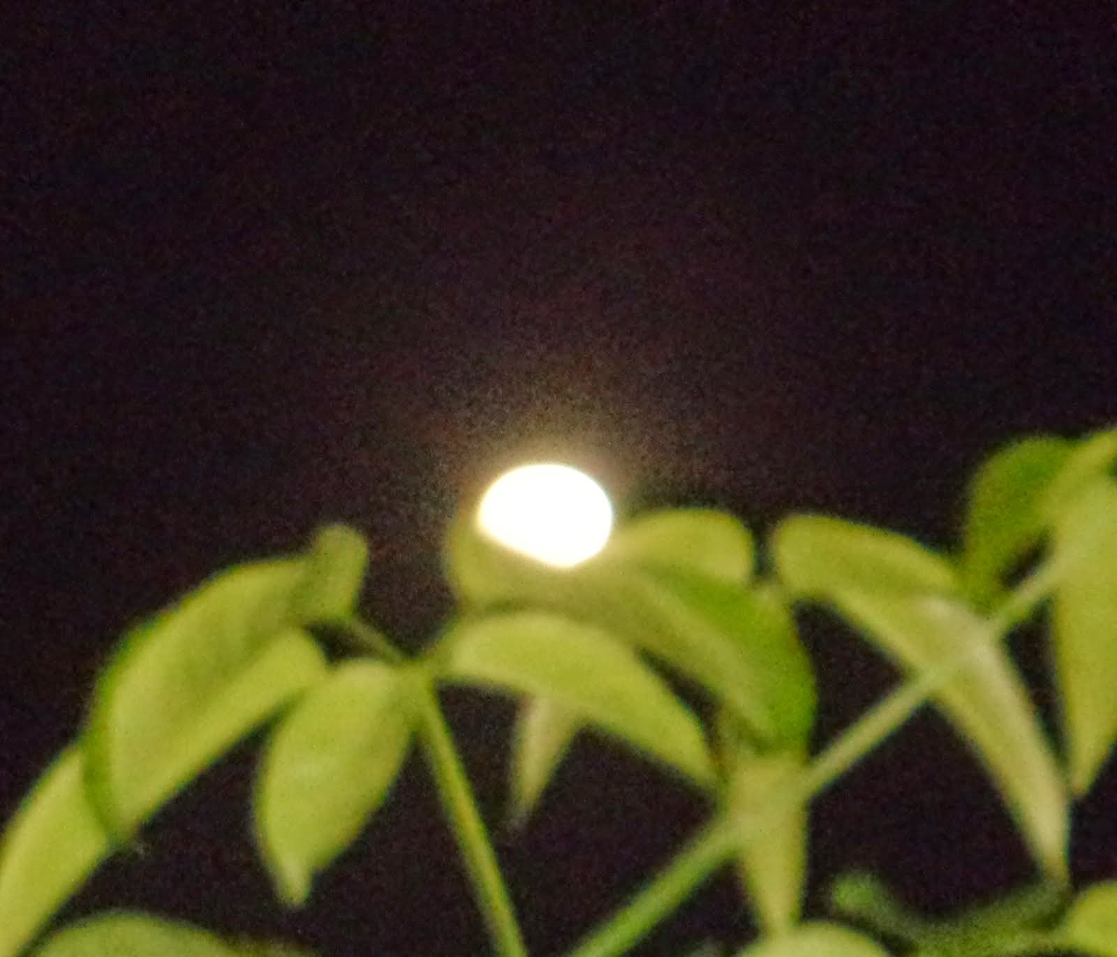 Lua de Maio