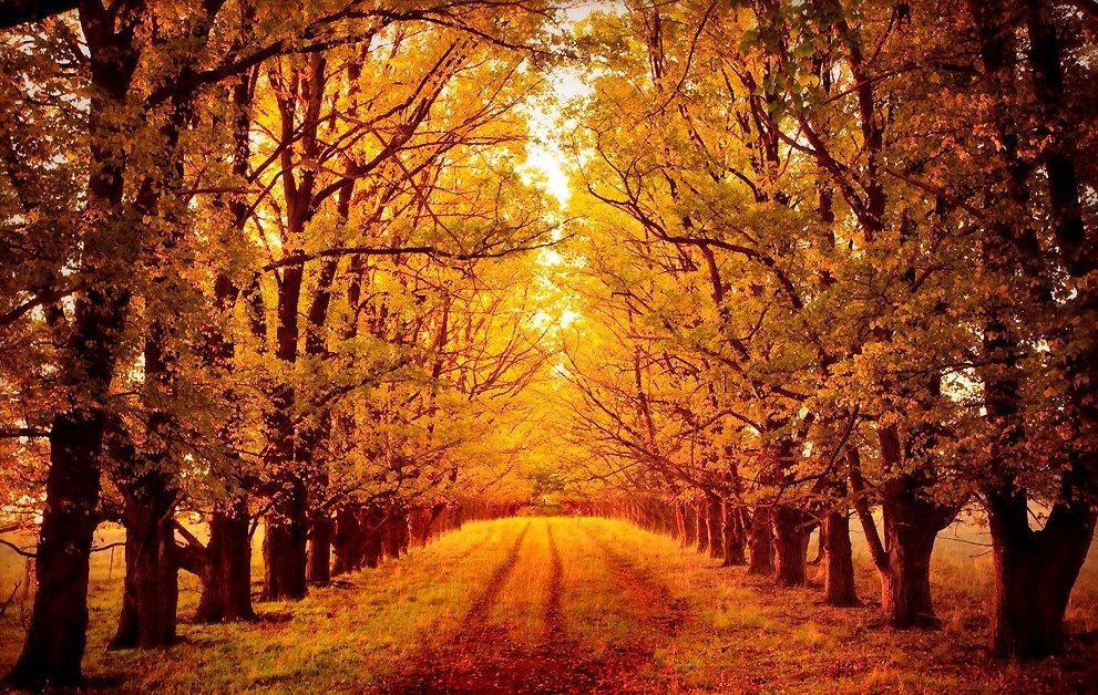 Banco de im genes 14 fotos hermosas del oto o hojas de - Fotos bonitas de otono ...