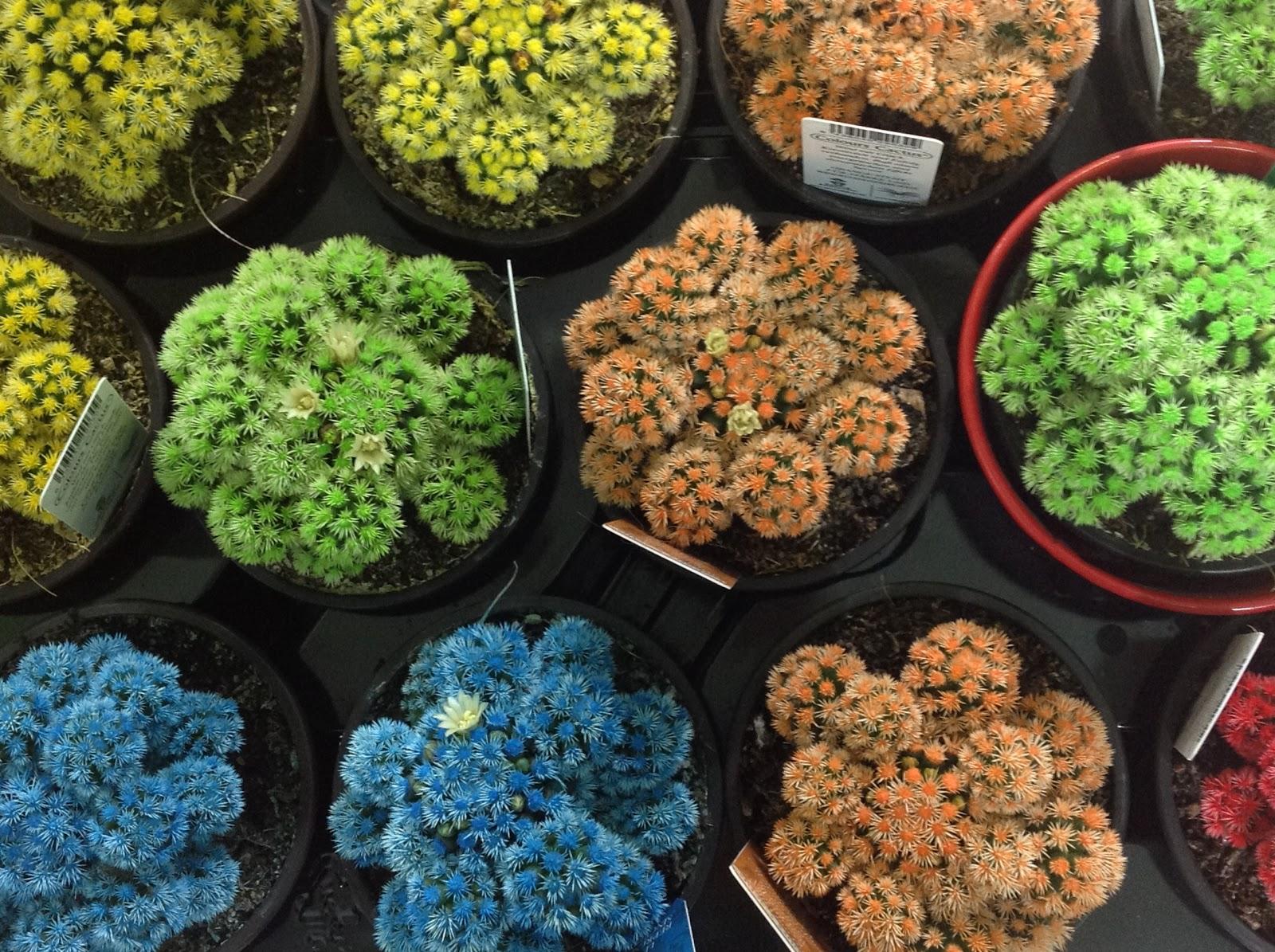 Bitkilerle Bezenmiş Rengarenk Bir Hayat
