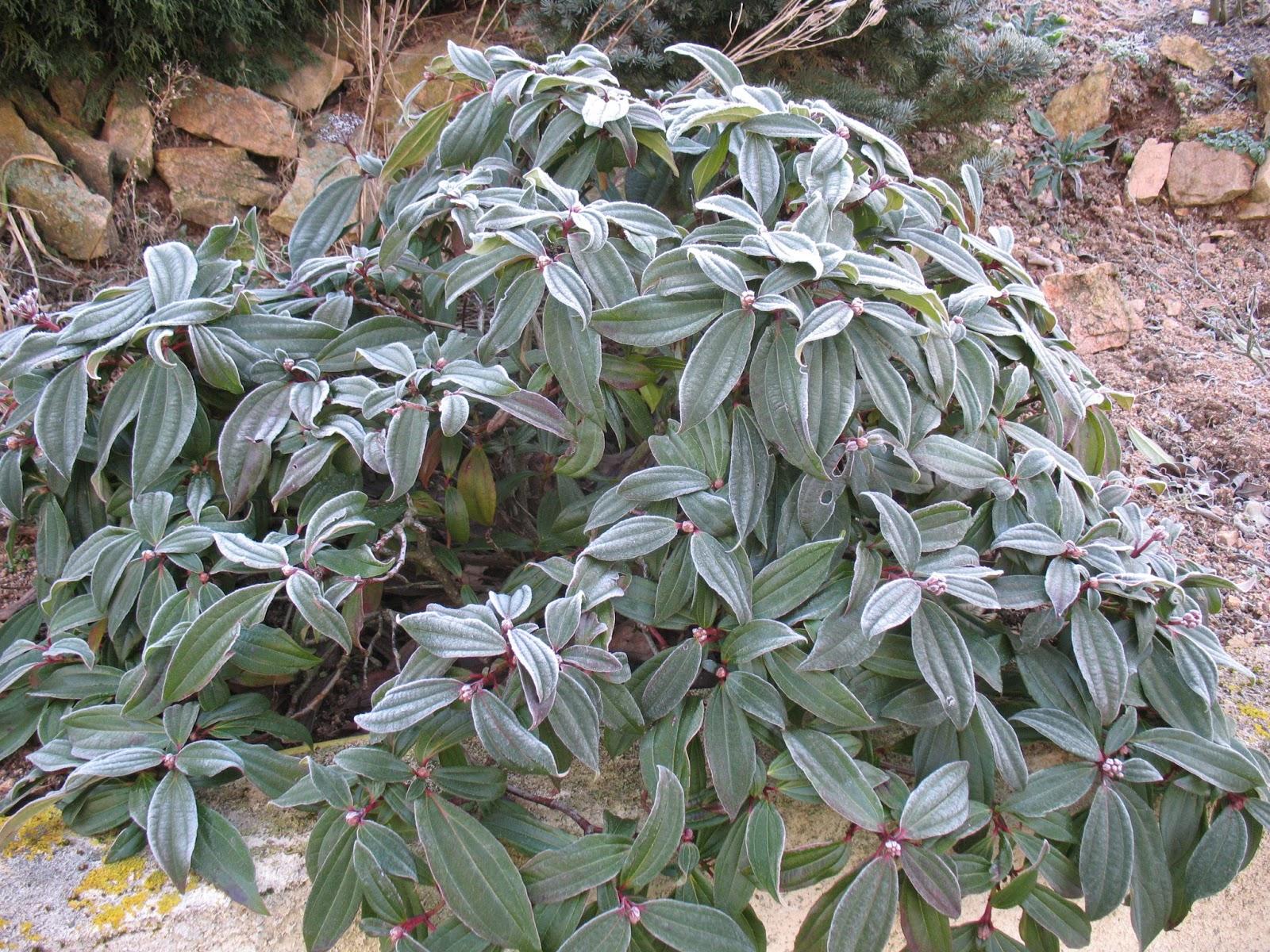 Roses du jardin ch neland le jardin en hiver for Jardin anglais en hiver