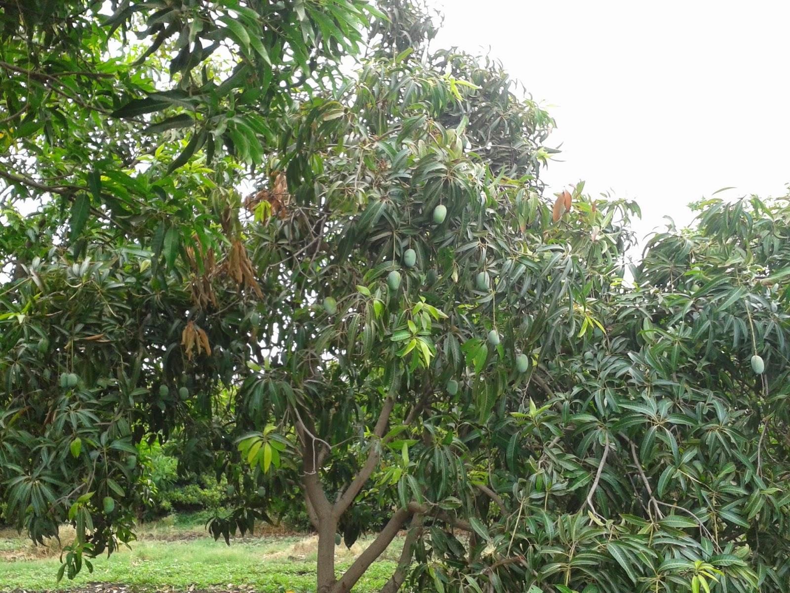 tree in marathi