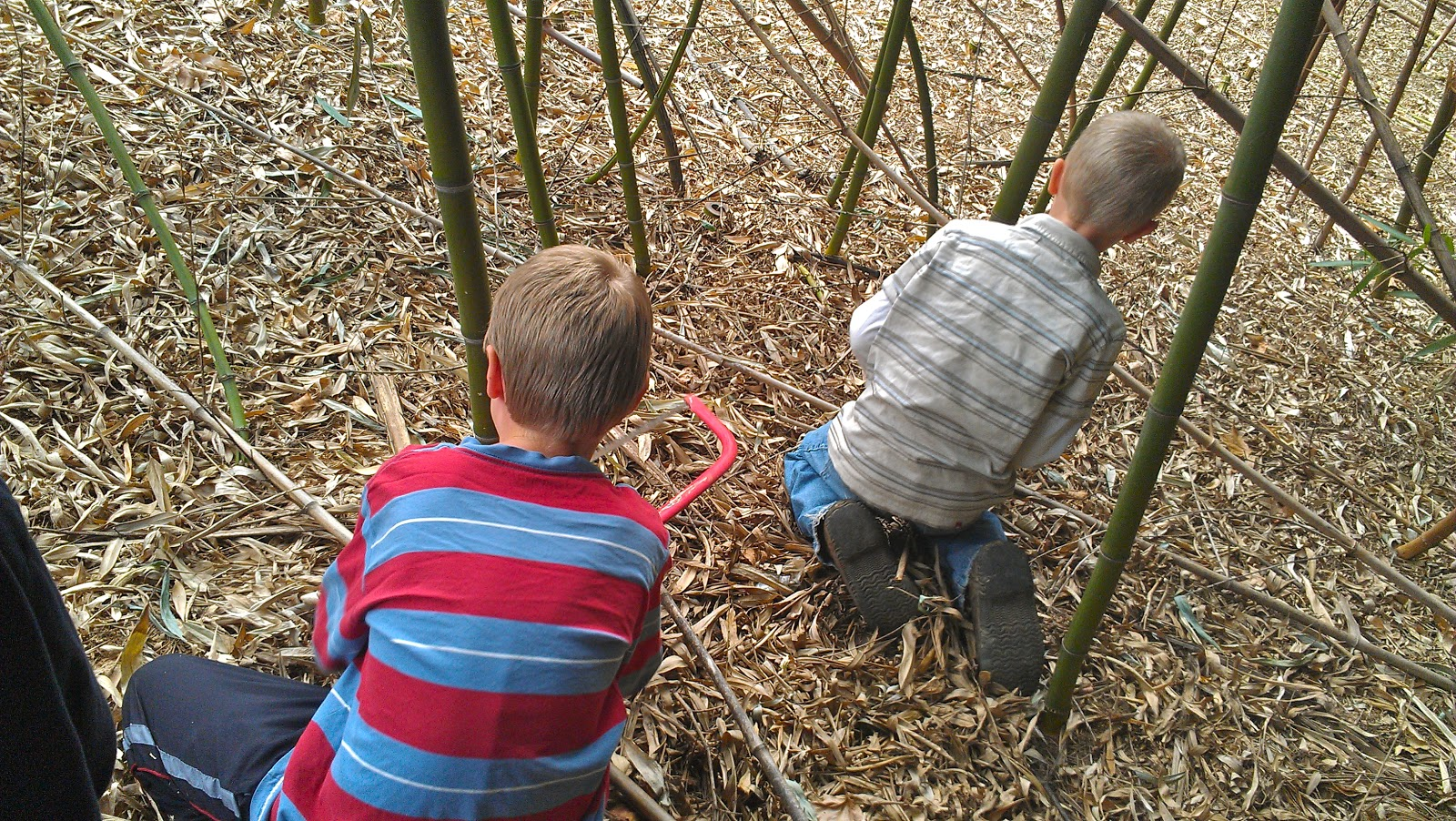 It's a Boy's Life: In the Bamboo Forest
