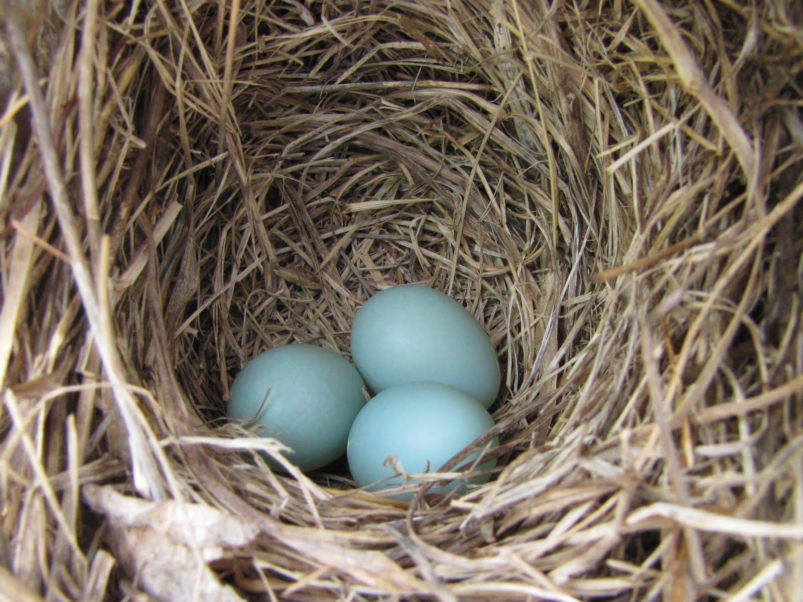 ... Box Plans likewise Bluebird Houses Nest Box Plans besides Baby Female