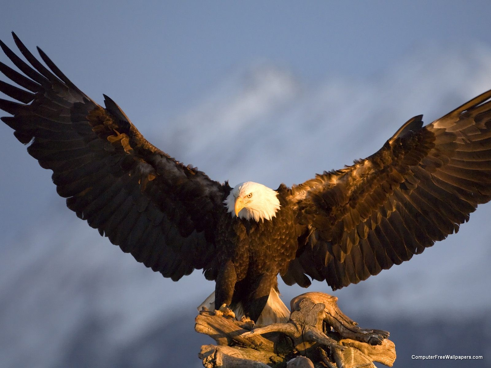http://1.bp.blogspot.com/-bgMwOsMinto/T9Av2tSsBCI/AAAAAAAAB6k/_st1V-C0uyo/s1600/bald-eagle.jpeg