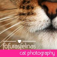 Fotos | Fofuras Felinas