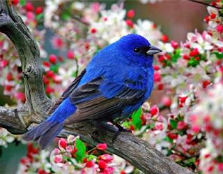 El Pájaro - Octavio Paz
