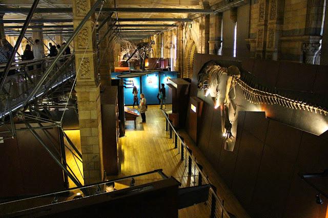 Dinosaurios Museo Historia Natural Londres