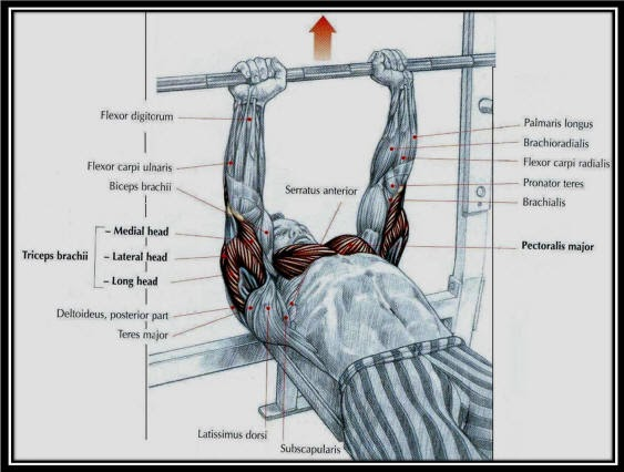 Dumbbell Press Or Bench Press