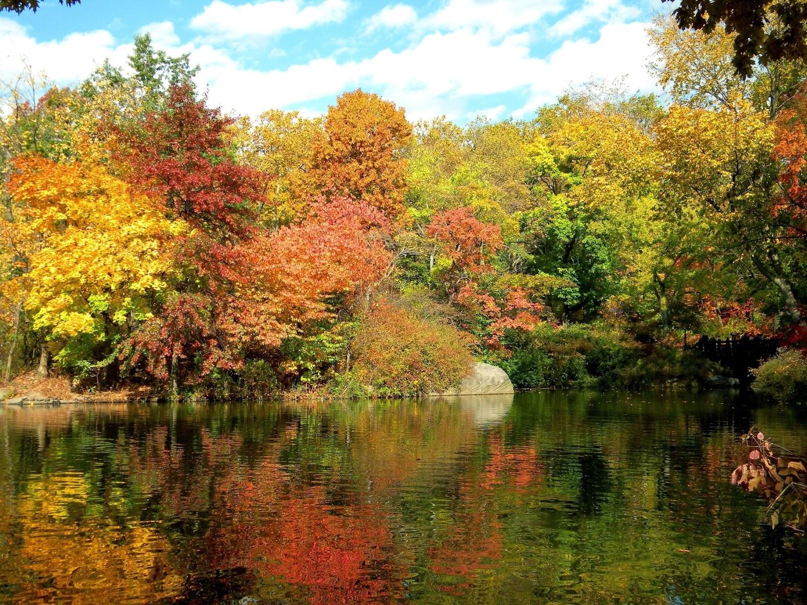 Fall Autumn Colors Cli...