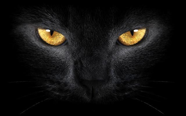 Gato Negro Fondos de Pantalla de Animales