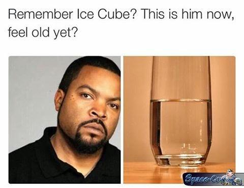 funny things celebrities humor