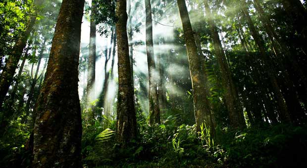 negara+dengan+hutan+terluas 10 Negara dengan Hutan Terluas