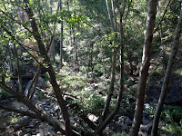 On Fish Canyon Trail, Angeles National Forest