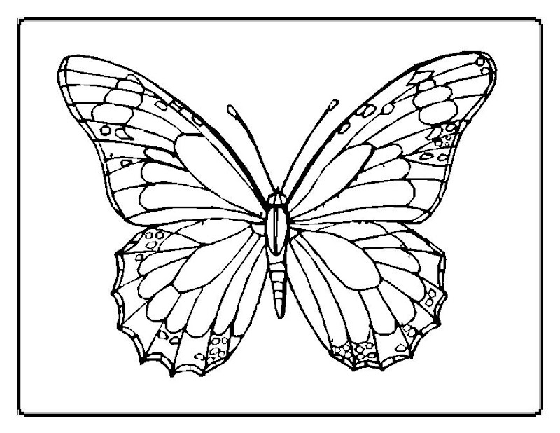 Cute and Beauty Butterfly Coloring Sheet title=