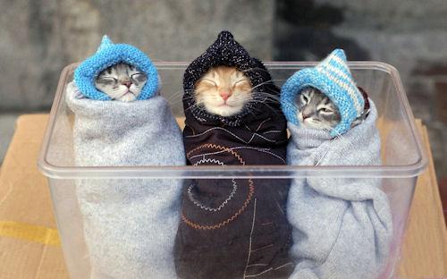 Tres gatitos - Three Kitten - Trois Chatons