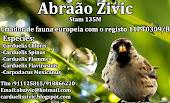CarduelisZivic - Criador Português