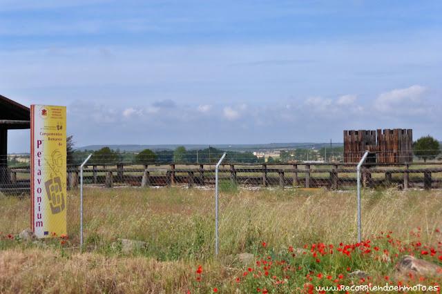 Campamentos romanos de Petavonium