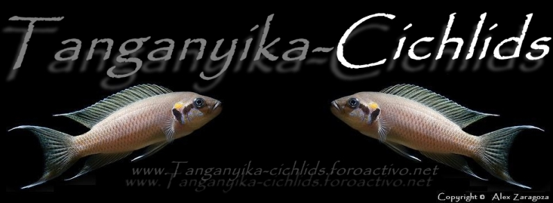 Tanganyika-Cichlids Fichas