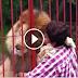 Όταν ένα λιοντάρι αγκαλιάζει...