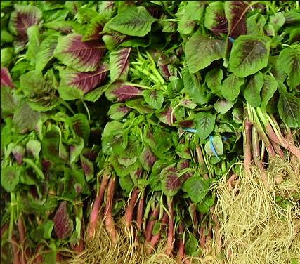 manfaat-sayur-bayam-bagi-kesehatan-tubuh-1.jpg
