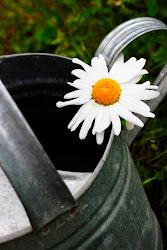 Svenska trädgårdsbloggar enligt zon