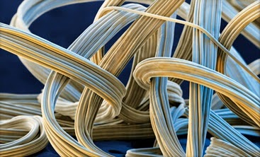 Microscopic view of spandex