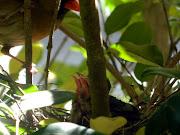 Cardinals 2012