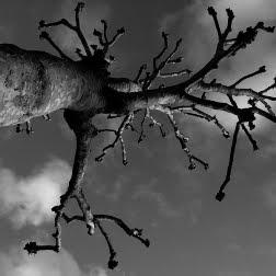 Деревья Grant Simon Rogers