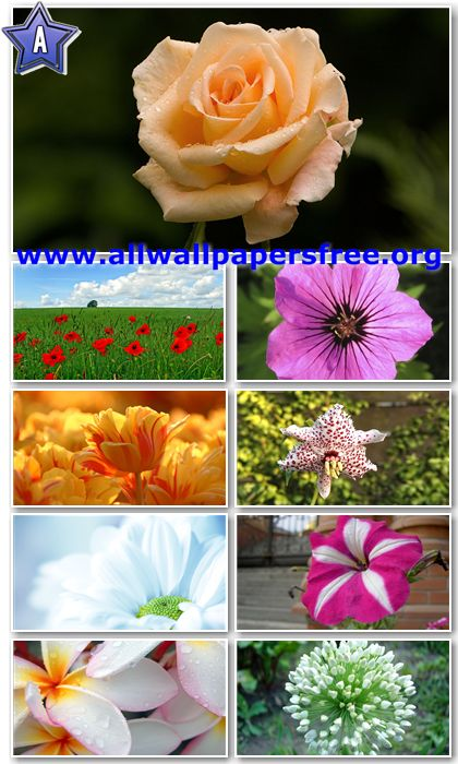 30 Beautiful Flowers HD Wallpapers 1366 X 768 [Set 9]