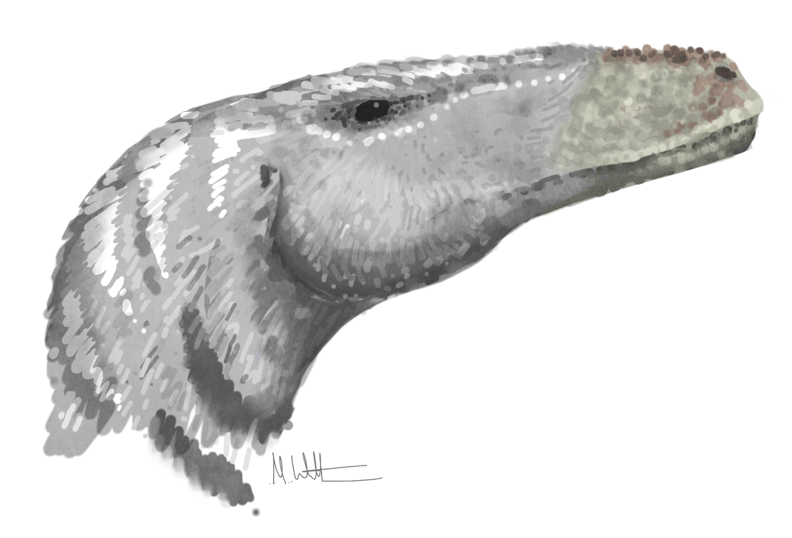 Mark Wittoncom Blog Baldeaglediagram Eagle Skeleton Drawing Bald Study 01 By Baron Quick Sketch Of Deinonychus Antirrhopus With Expanded Bone Puncturing Jaw Muscles A Requirement Having Bite As Strong Modern Alligator