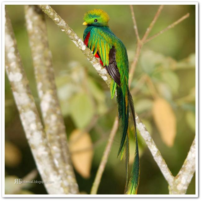 14 Awesome Gorgeous And Unusual Birds | Simply get it