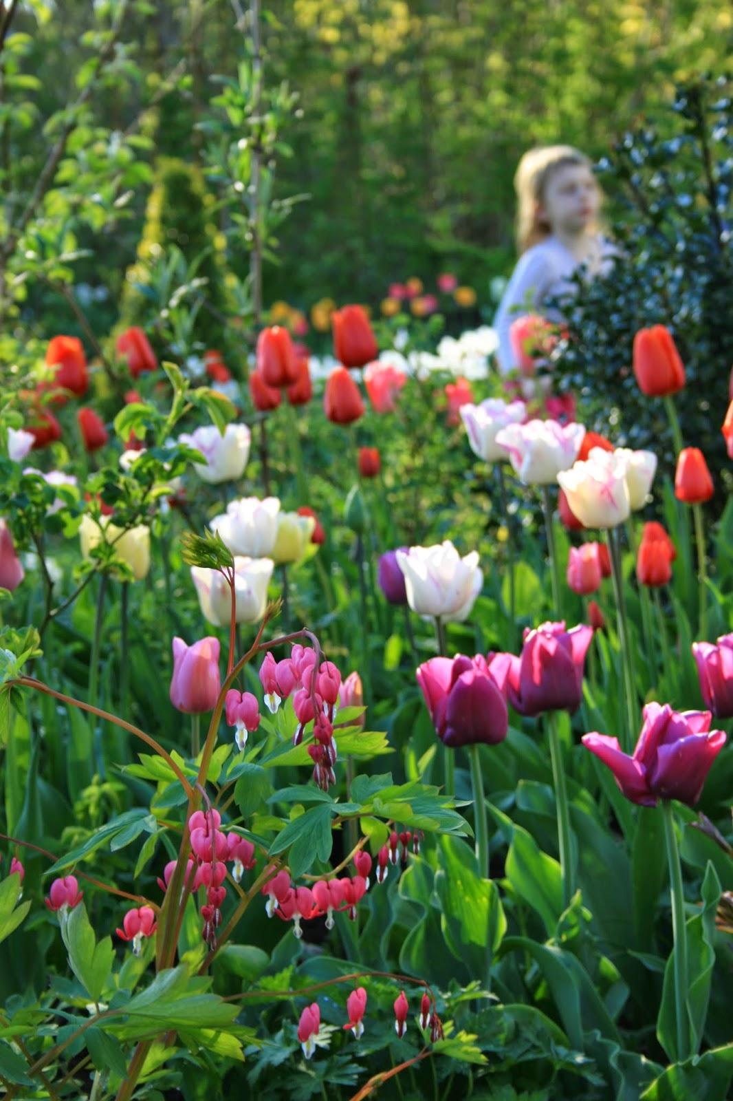 vårblommande trädgård