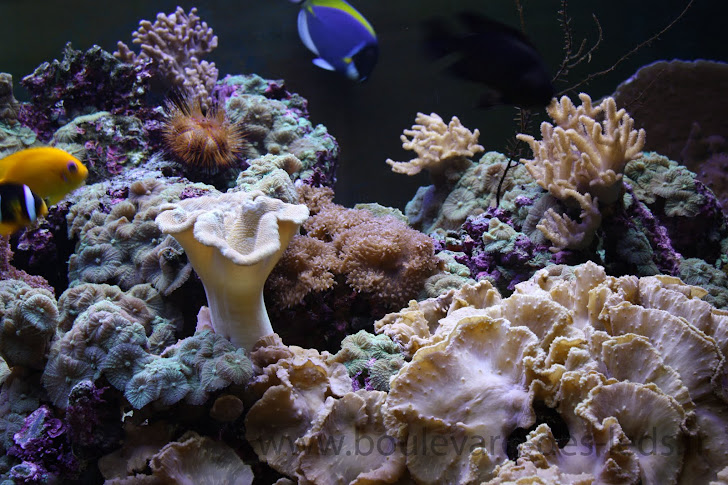 bandeau led aquarium bandeau led aquarium projet led pour aquarium r 233 cifal 224 quot coraux mous quot