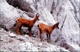 Fauna salvaje d'Asturies