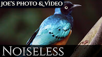 Reducing High ISO Noise | Noiseless Tutorial