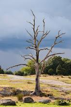 ensamma trädet