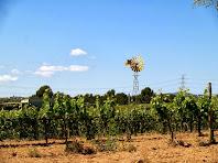 Paisatge de la vinya a la Serra de la Font de l'Ocata