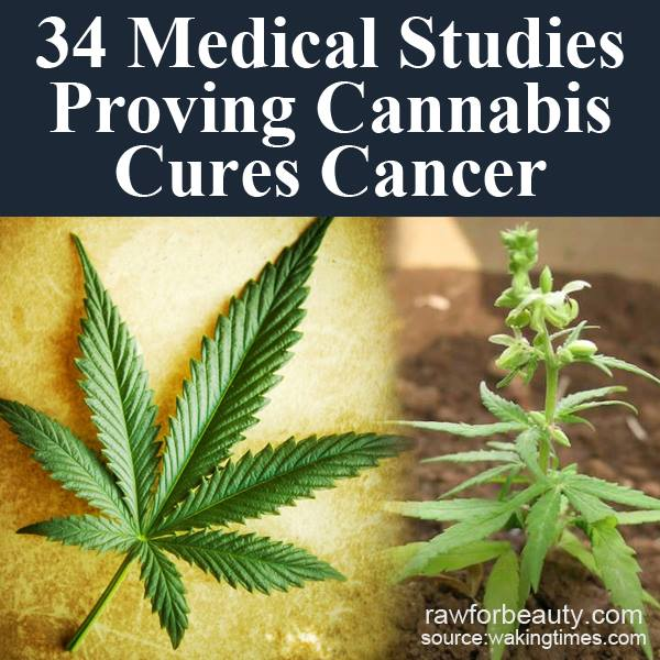 cannabis cures How cannabis oil works to kill cancer cells 32 studies showing that cannabis cures cancer how cannabis oil works | make the oil.